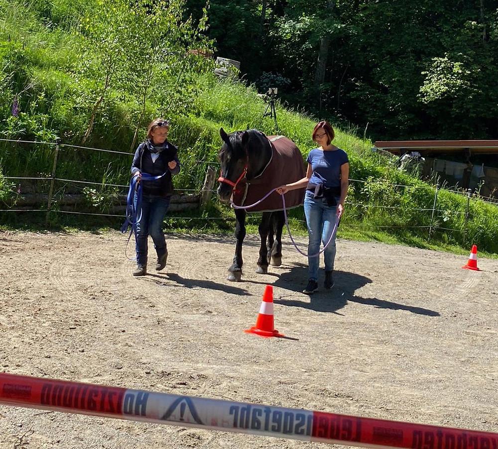 Pferd Parcour zwei Teilnehmer