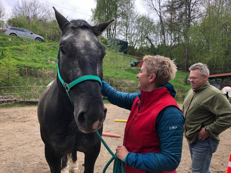 Manager in Gummistiefeln…         Tiere im Business-Coaching