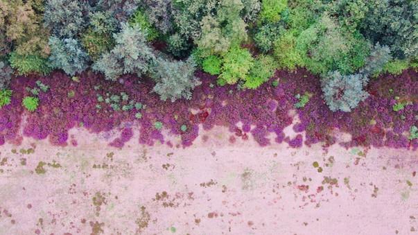 De kleurrijke heide