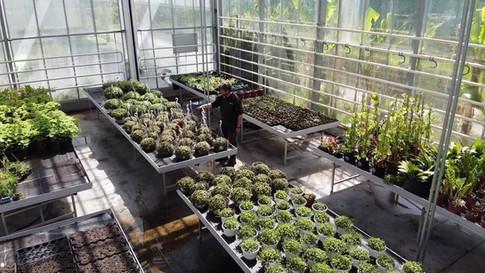 Afdeling Tuinbouw PITO Stabroek
