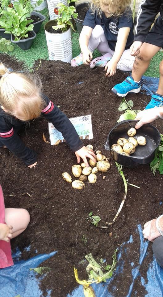 Growing potatoes.jpg