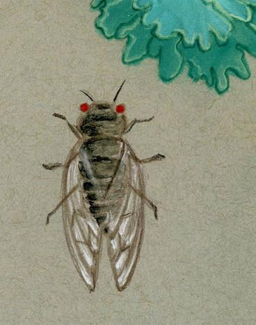 Lichen, Cicada