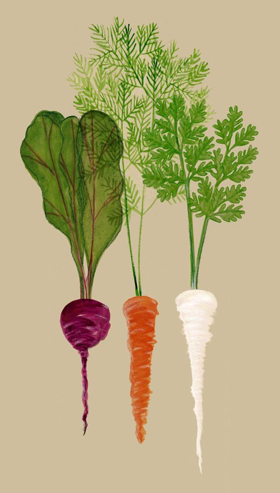 Beet Carrot Parsnip