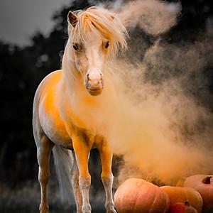 Halloween Honey