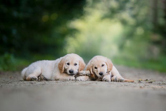 William & Woody, hulphonden in opleiding