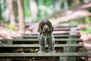 Puppycoaching - Puppy-Pret