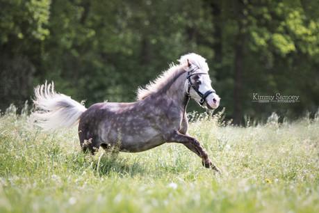 Minipaardje - paardenfotografie