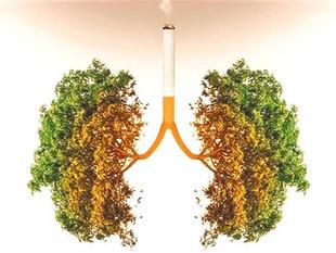 Associer cannabis et tabac majore le risque cancer