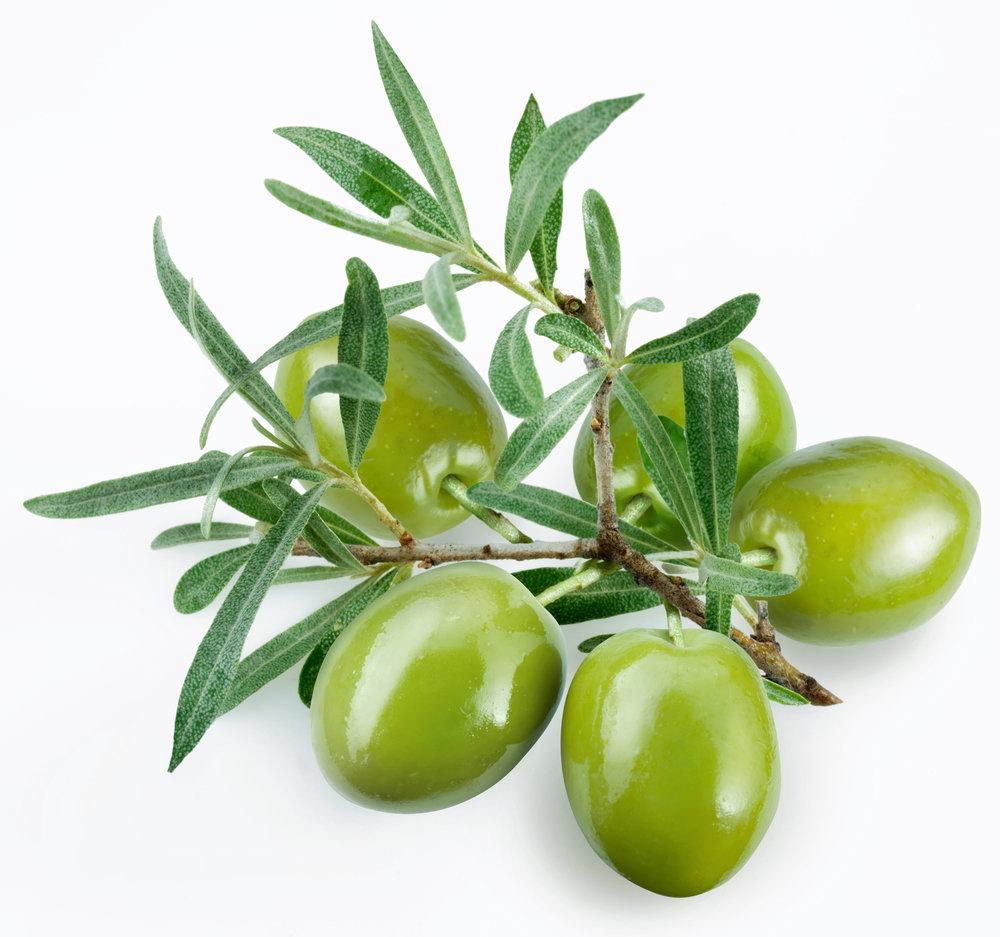 Melgarejo Picual Extra Virgin Olive Oil ec5c69389fad