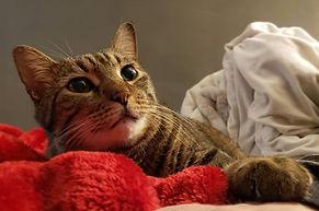 CatModel-Mr.PJ.jpg
