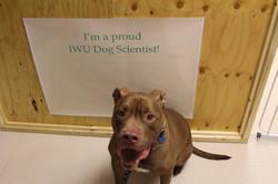 Justice, proud Dog Scientist!