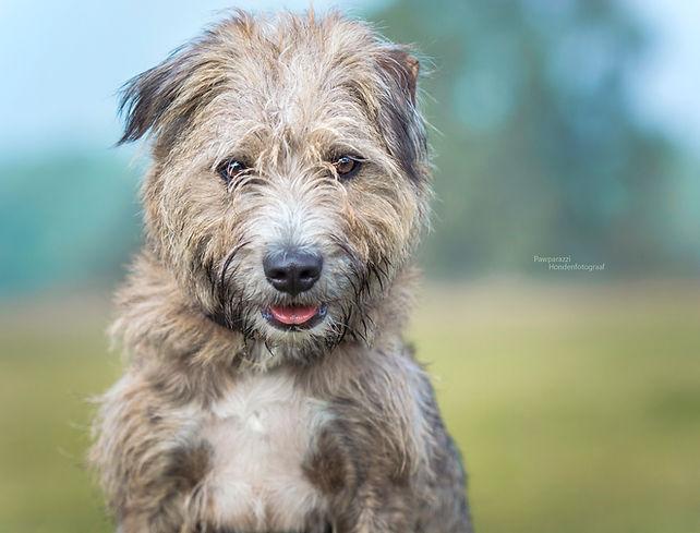Ruwhaar hondje 2(kl).jpg