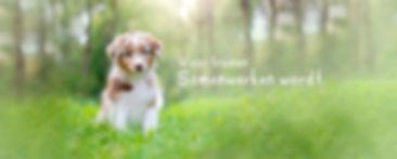 bamnner website new.jpg