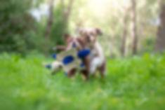 Race pups.jpg