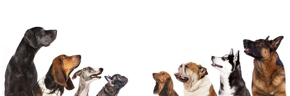 色々な犬種の犬達