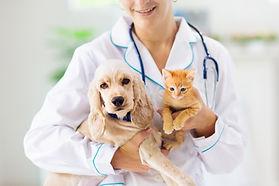 犬と猫の診療