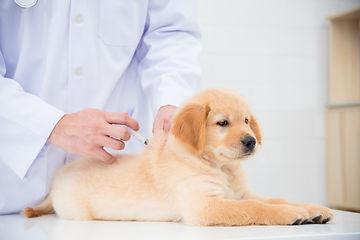 予防注射を打つ犬