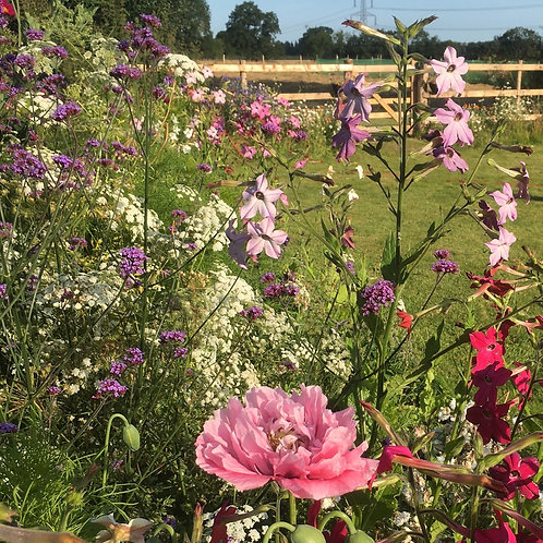 £149 Planting Border Gift Voucher