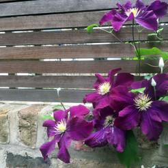 Islington Garden