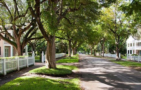 street-trees-1.jpg