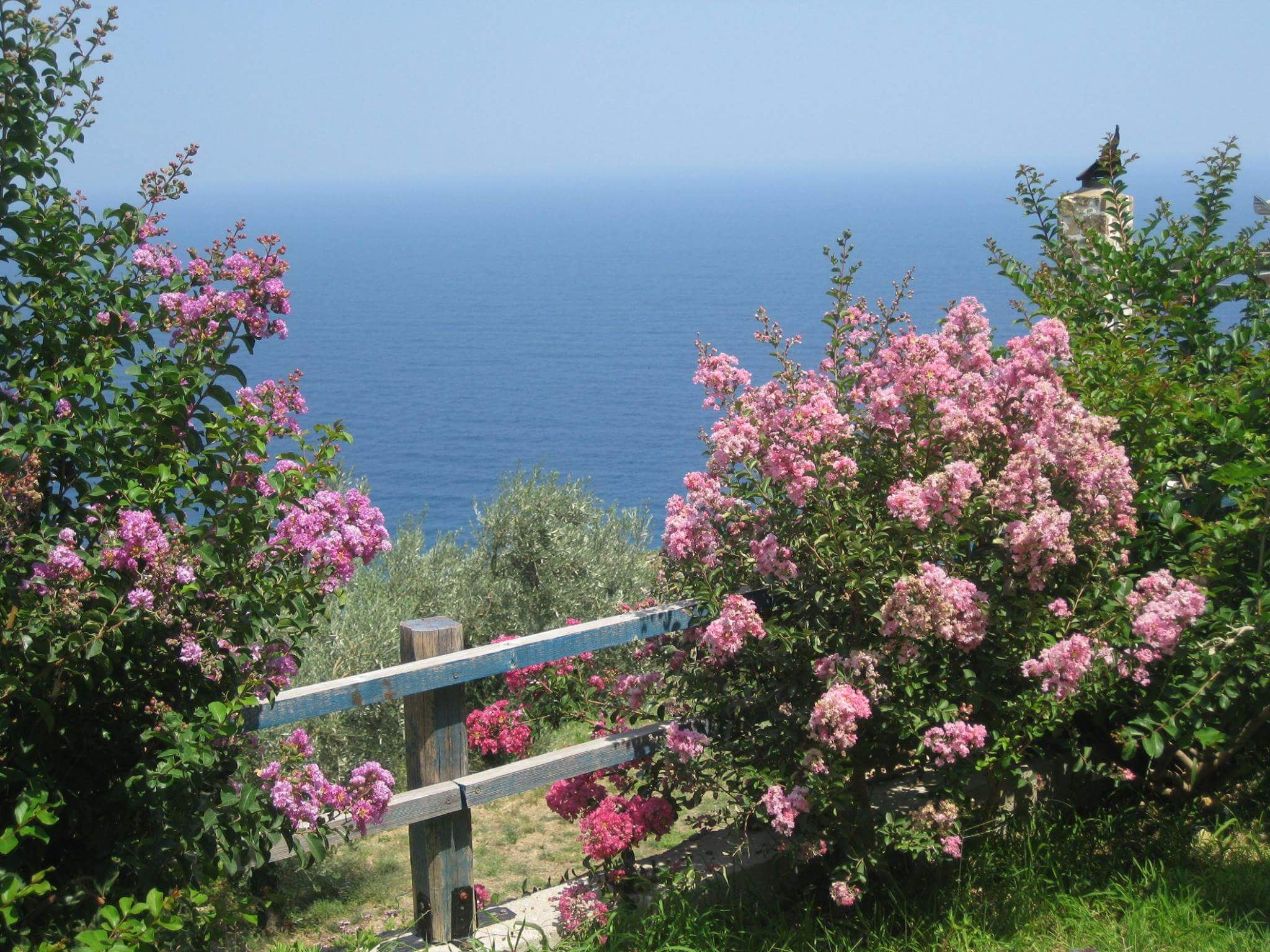 Flowers and Sea View