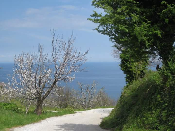 Pelion Greece