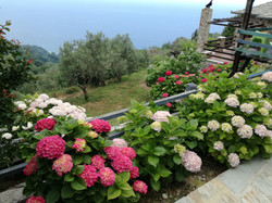 Flowers Blooming at Sunrise View