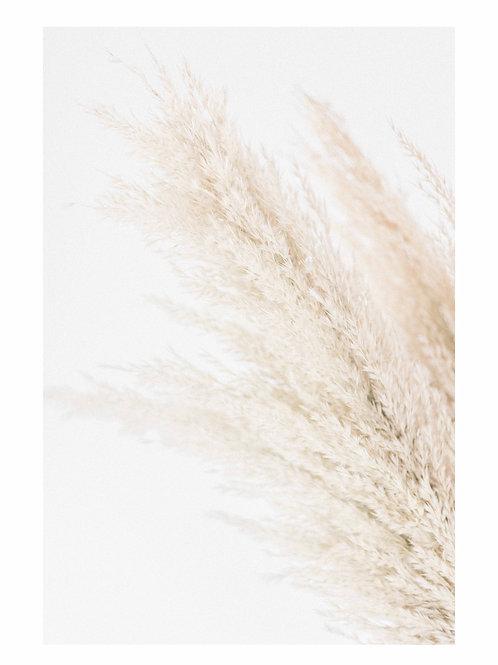 Pampas Grass Right
