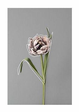 tulip and line.jpg