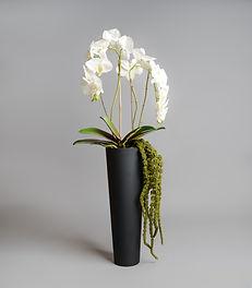 Flowers  (16 of 42).jpg