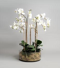 Flowers  (27 of 42).jpg