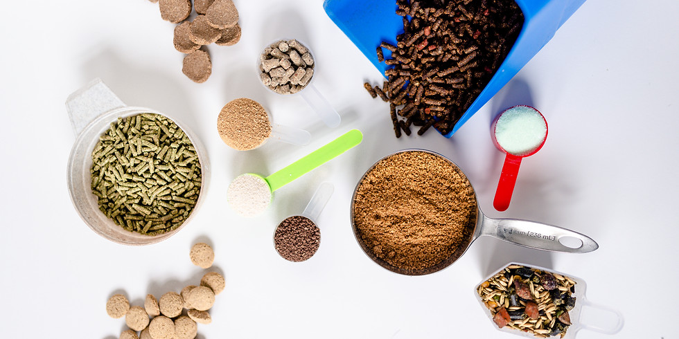 -ON DEMAND- How to Choose the Right Feeds & Supplements for Your Horse