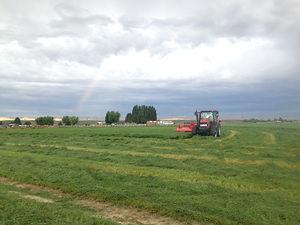 Baling teff with rainbow.jpg