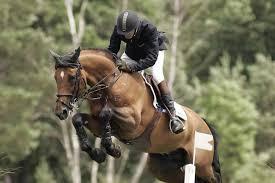 Soigner le cavalier pour guérir le cheval.