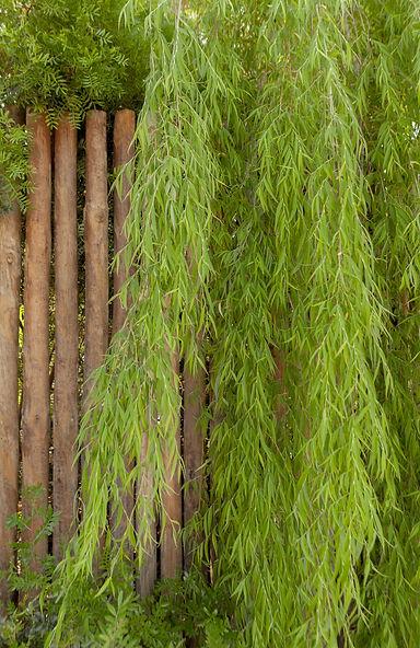 CP_Nina_Gardens_Pedro FB_200507_098-Edit