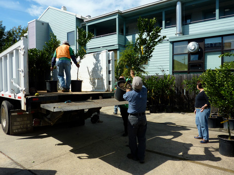 Planting fruit trees is part of hurricane recovery