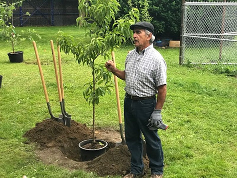Fruit trees planted in Bronx garden in project to add more nutrition, clean air to community
