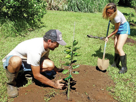 'Low hanging fruit': KHS students plant 50 new tropical trees gifted to school farm by FTPF