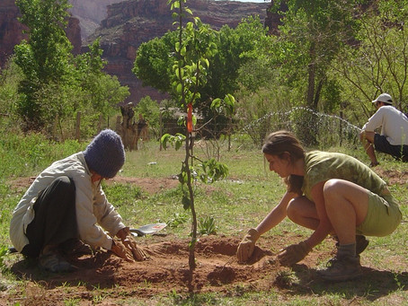 One nonprofit plants trees to help underserved communities and the environment