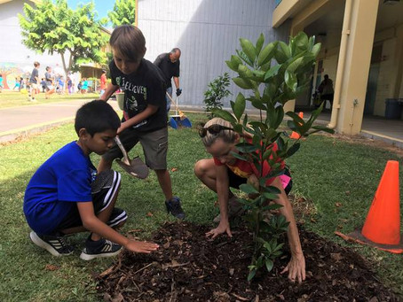 Foundation helps students grow fruit trees at Kahakai Elementary School