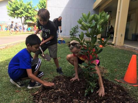 Foundation helps students grow fruit trees at Kahakai Elementary School