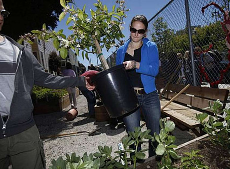S.F. garden to help feed the homeless