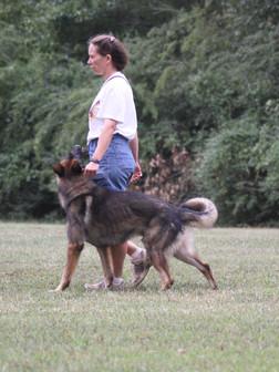 Philippa_Dog_Trials_20.9.14 186.JPG