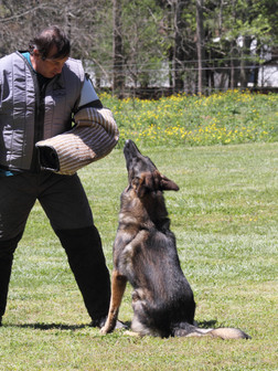 april2016dogtrials0728.JPG