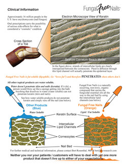 Fungal Free Nails Fact Sheet