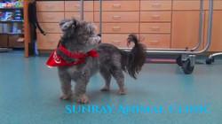 Sunray-Animal-Clinic