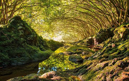 Toiture naturelle, île de La Réunion