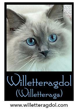 Willetteragdol Logo (NEW) cropped.jpg