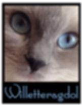 Willetteragdol|Ragdoll Cats|Ragdoll Kittens