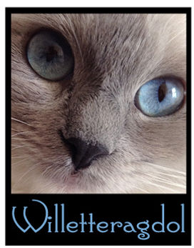 Willetteragdol|Ragdoll Cats|Ragdoll Kittens
